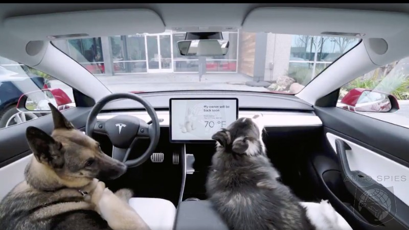 Latest Update Keeps Your Pets Cool In Your Parked Tesla